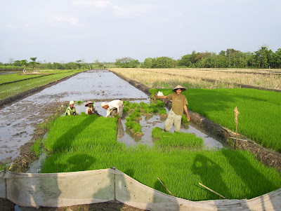 Pengertian, sub sektor, faktor - faktor produksi pertanian