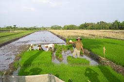 Materi I : Ekonomi Pertanian