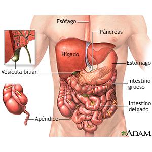 Lamoreabio Biologia Na Educação E Prevenção Em Saúde