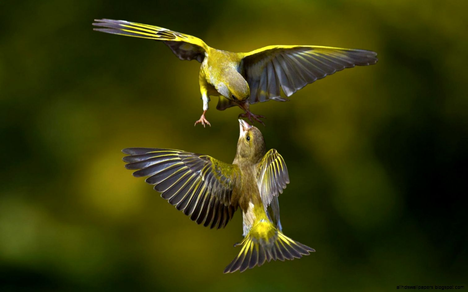 Macro photography birds wallpaper 1080p all hd wallpapers - Hd pics of nature with birds ...