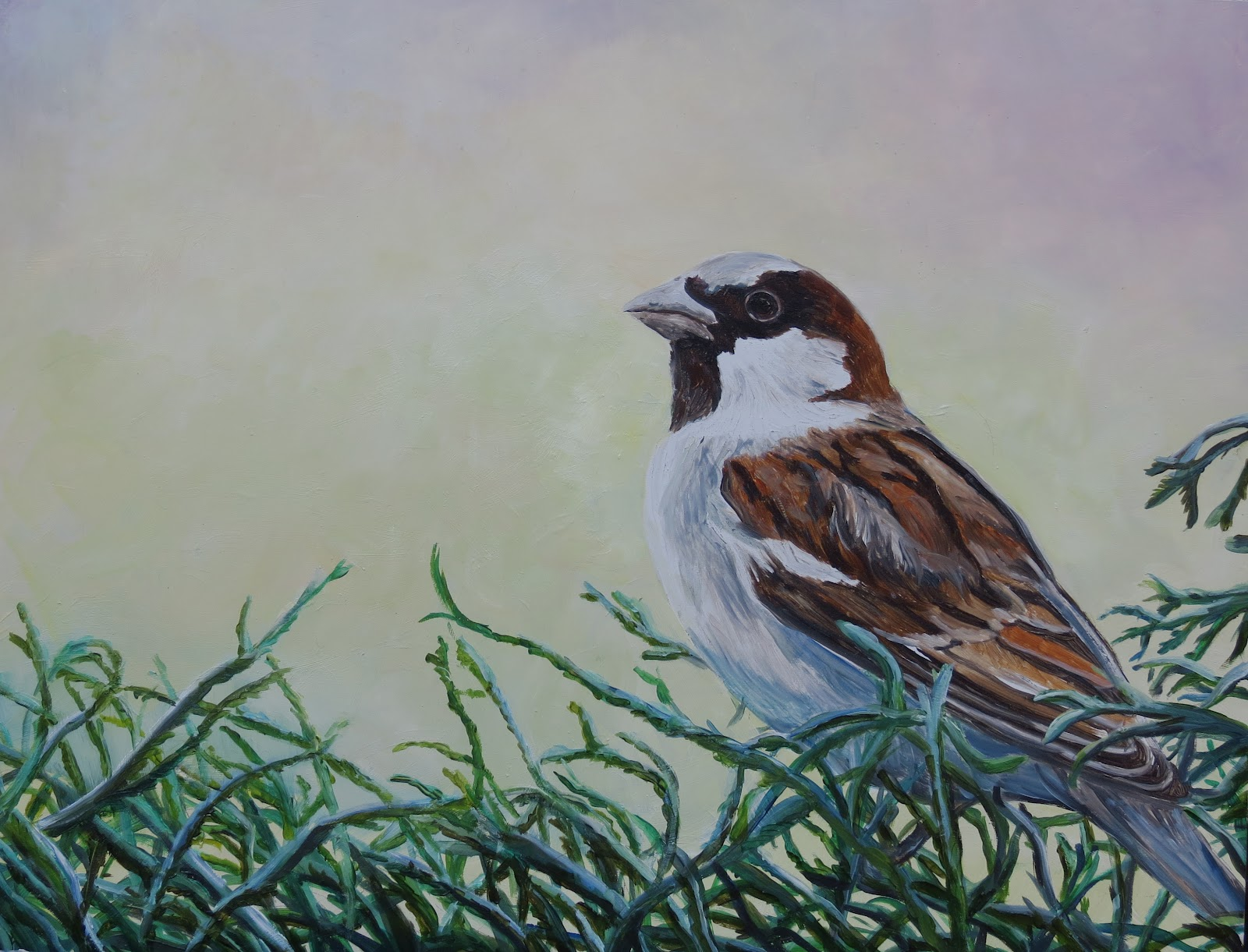 Daily Painters Of Pennsylvania Quot House Sparrow Quot Oil