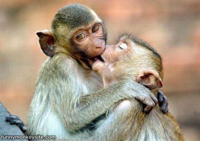 hilarious monkeys - photo #23