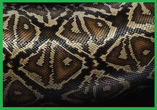 mibebi.com/kulit ular