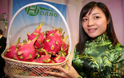 Dragon Fruit and Its Benefits for Health