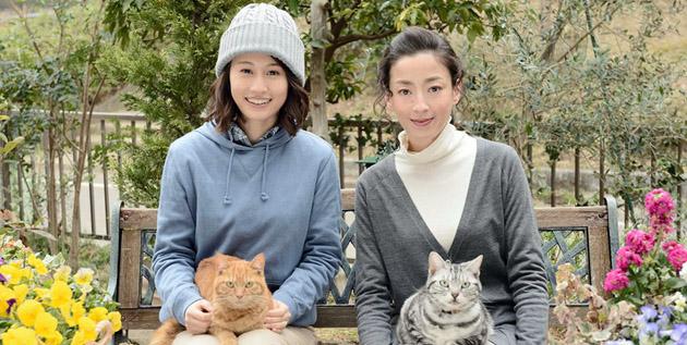 http://akb48-daily.blogspot.hk/2016/02/maeda-atsuko-co-operate-with-miyazawa.html