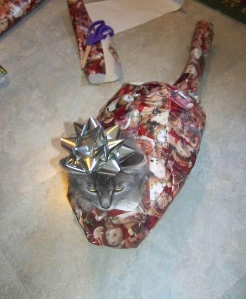unwrap me right meow
