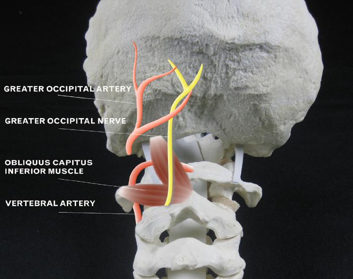 Faccia e forum di dolore del collo