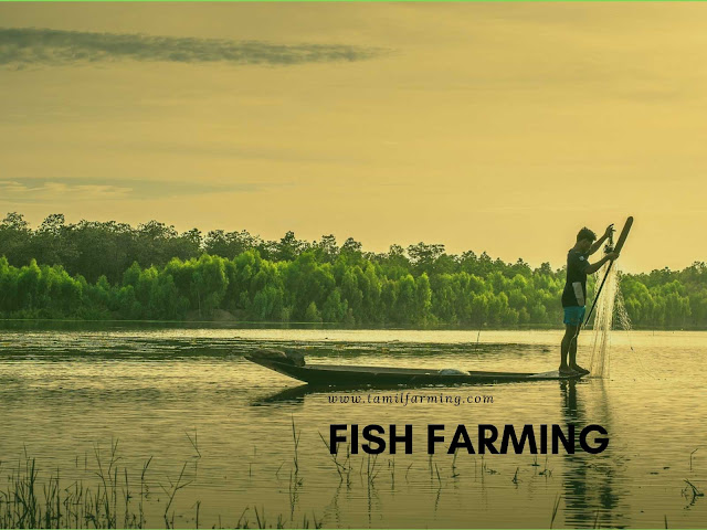 Fish Farming, Meen Valarpu, மீன் வளர்ப்பு, Meen Pannai, Organic Farming Methods