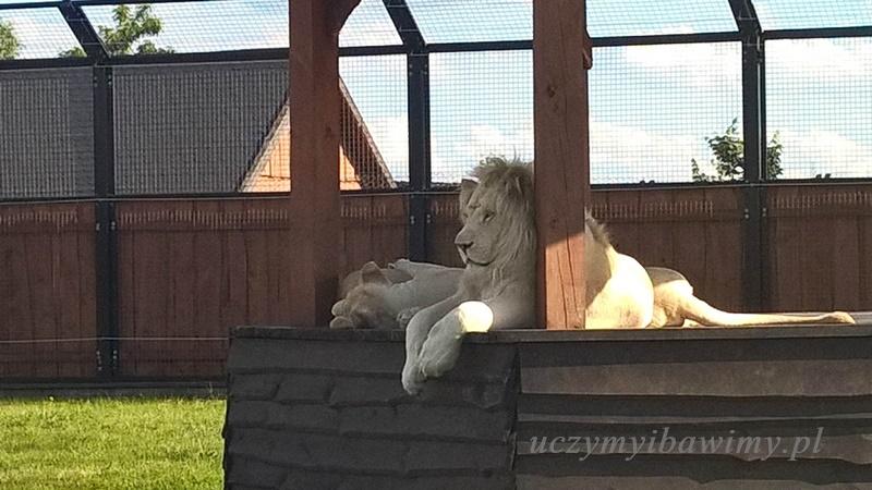 Zwierzęta egzotyczne Montessori