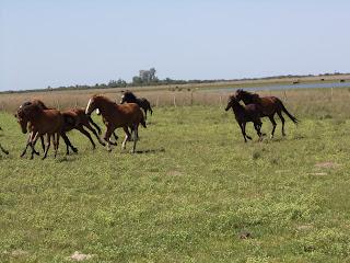 riitta reissaa, Argentiina, Corrientes, working ranch, karjanajo