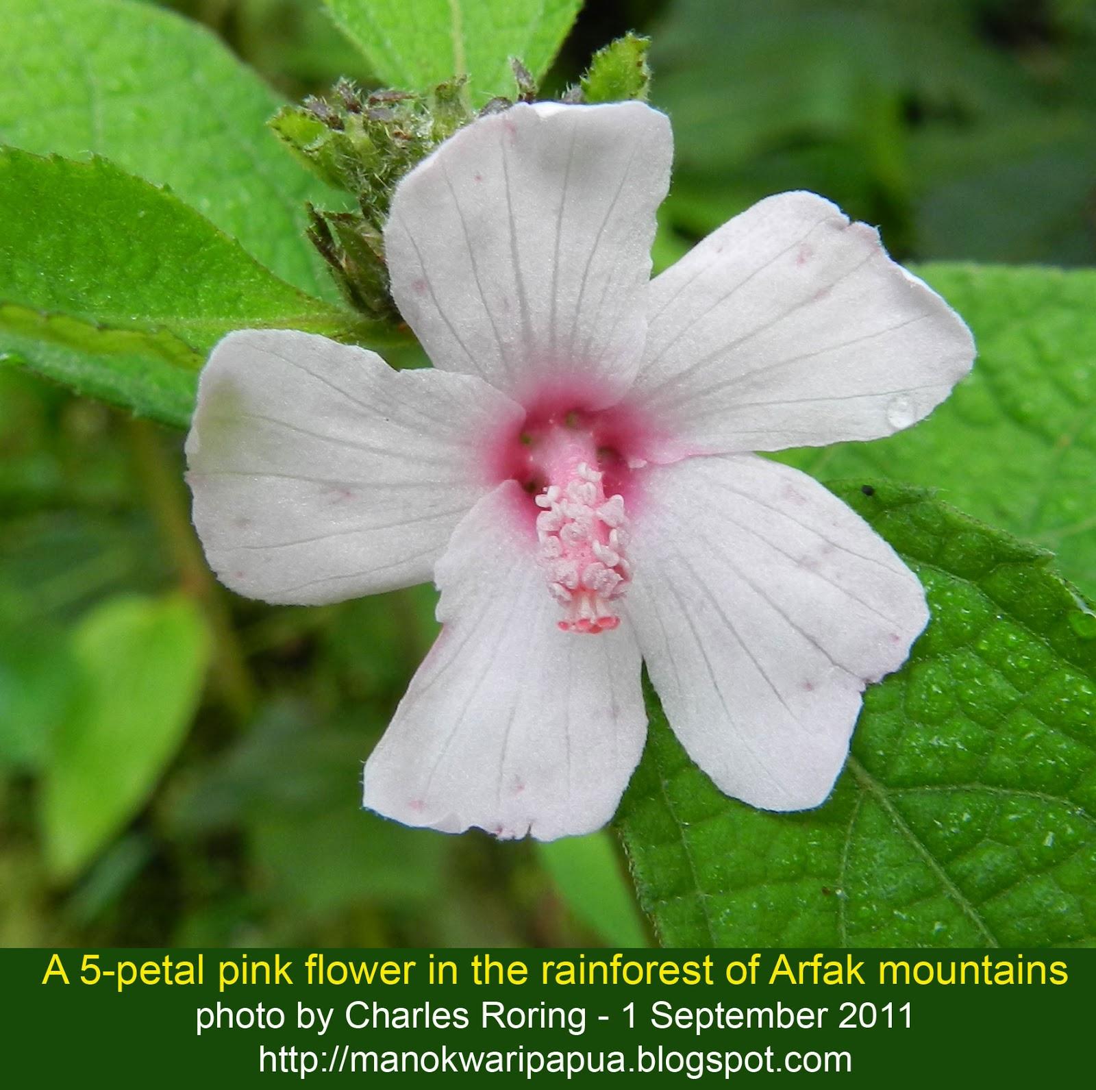 Birding and Wildlife Watching: Pretty Rainforest Flowers