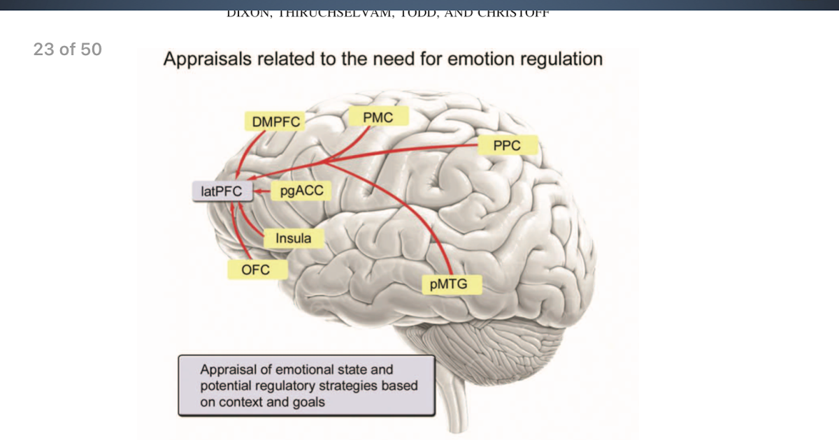 IQ's Corner: Emotion and the Prefrontal Cortex: An ...