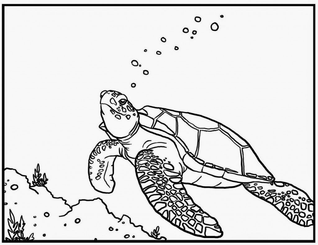 Neptune 911 For Kids Print And Color The Turtle Seahorse And Sea Star