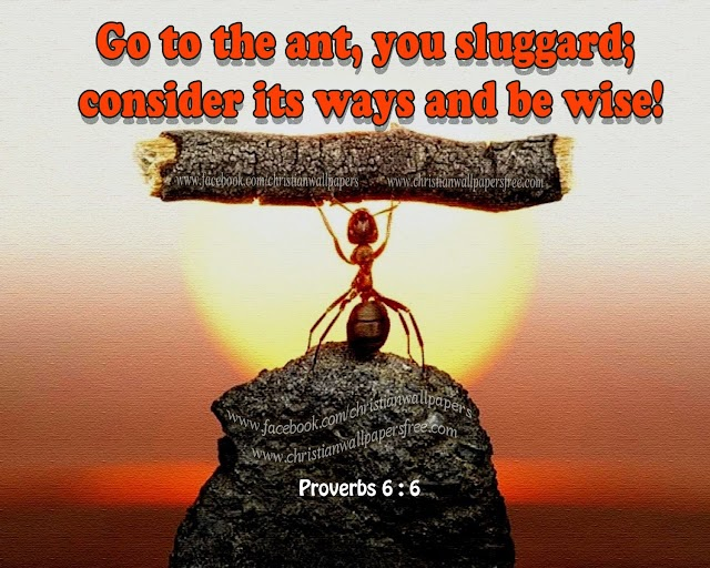Proverbs 6:6 how to be wise? Learn from Ant