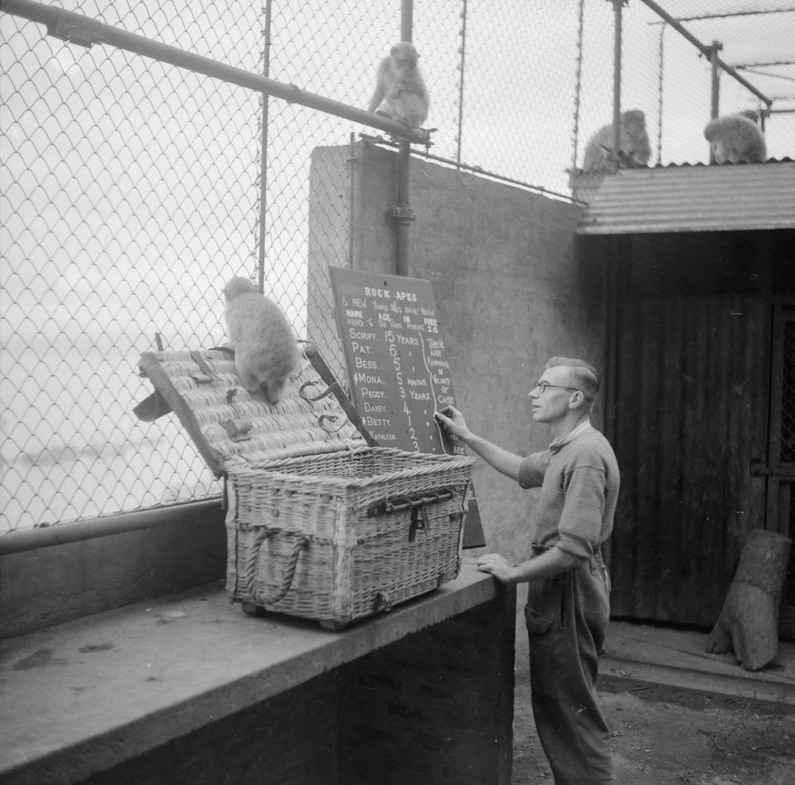 Apes are checked in at Gibraltar. Churchill had heard a legend that if the apes ever left the rock, Gibraltar would cease to be a British colony, so he sent in shipments of primates to forestall that.