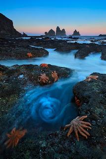Wildlife Photographer of the Year stelle marine