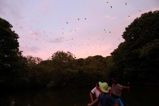 Đi xuồng tham quan vườn chim Tư Na