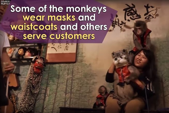 Japanese restaurant hires monkeys to serve tables