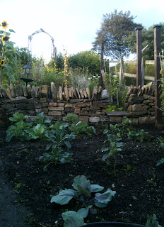 How to start your brassica bed