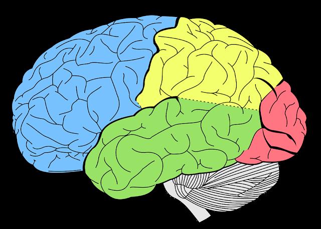 test kemampuan mengingat otak manusia