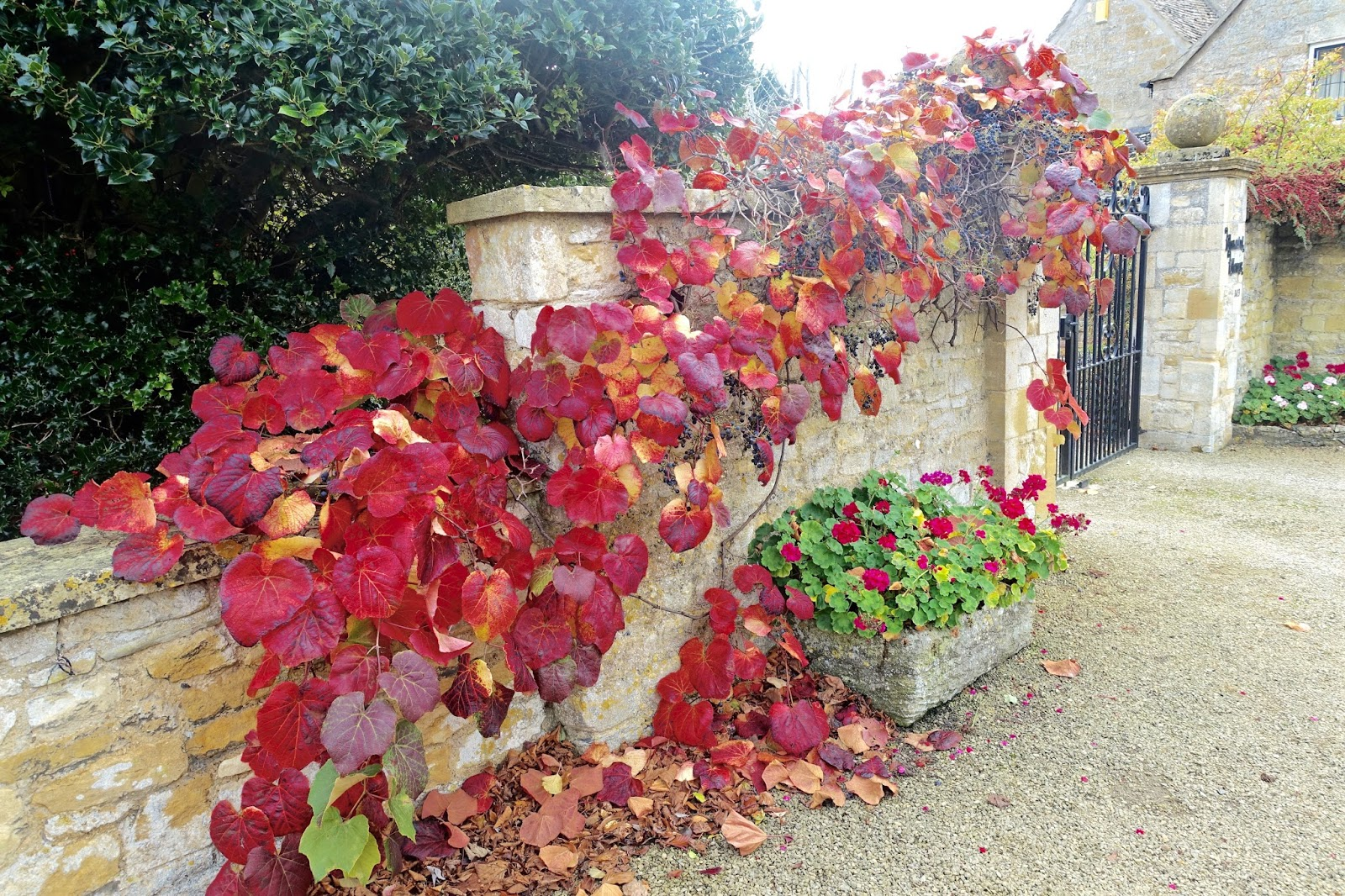 autumnal leaves in october