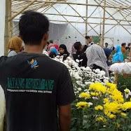 Kebun Bunga Krisan Wonobodro