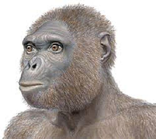 Saheloanthropus Tchadenesis