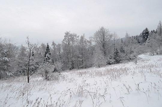 Zarastająca polana.