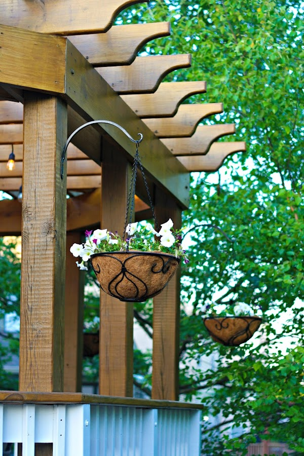 Hanging plants on pergola