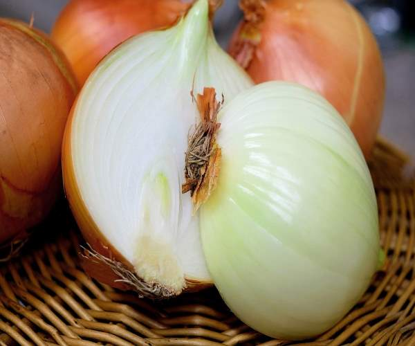 cebola-onion