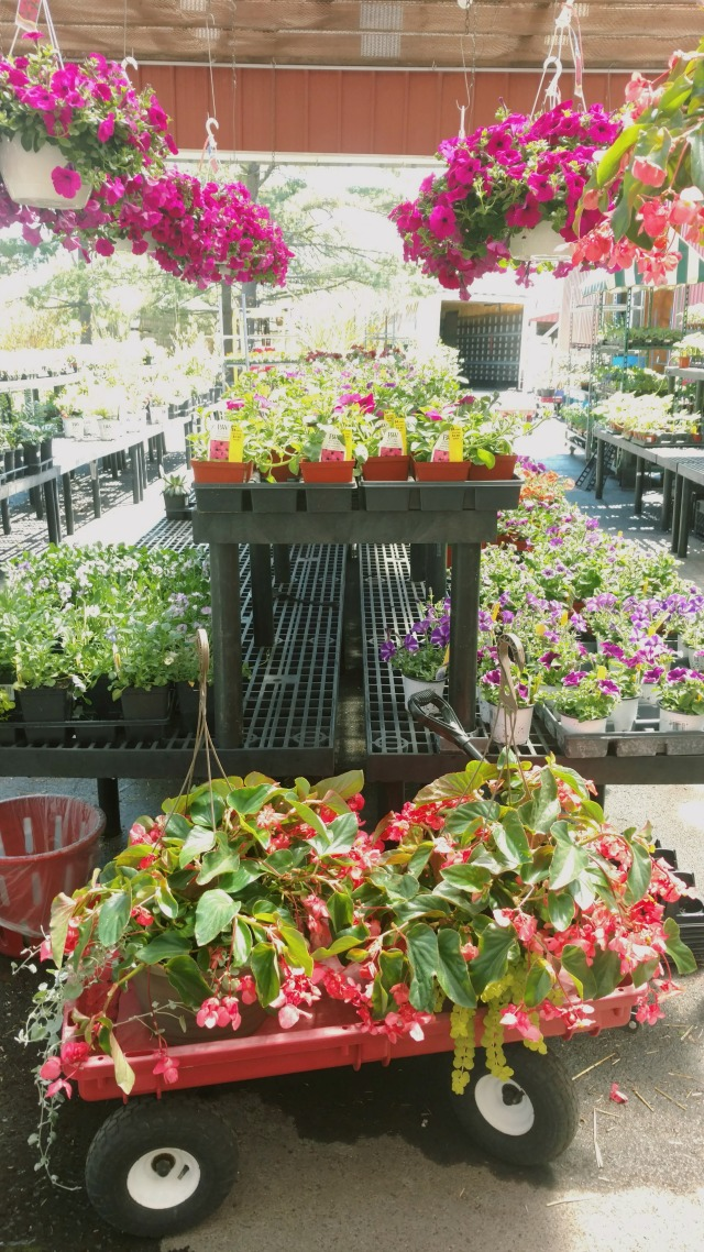 Flower beds and hanging pots of flowers at an orchard.