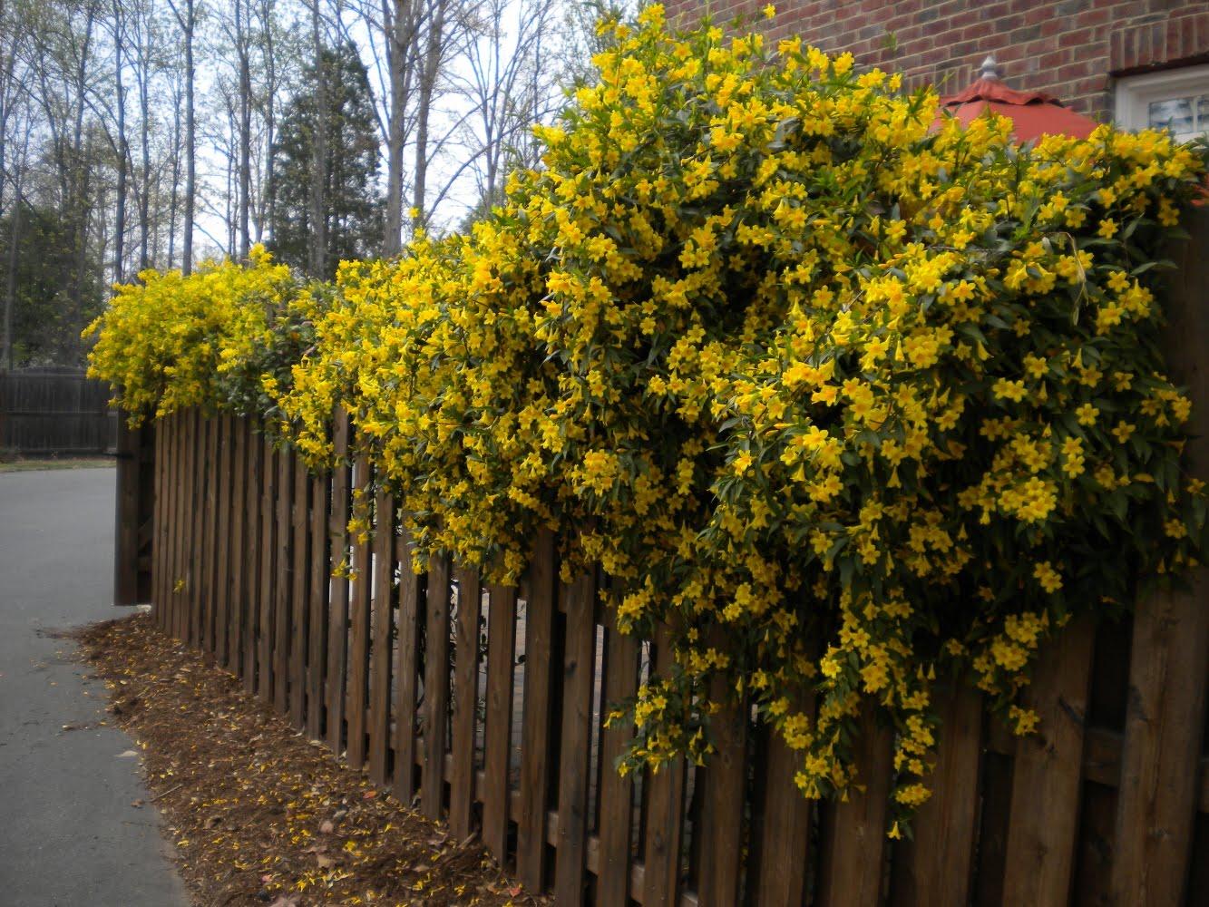 sherri u0026 39 s jubilee  my nature stroll around the neighborhood