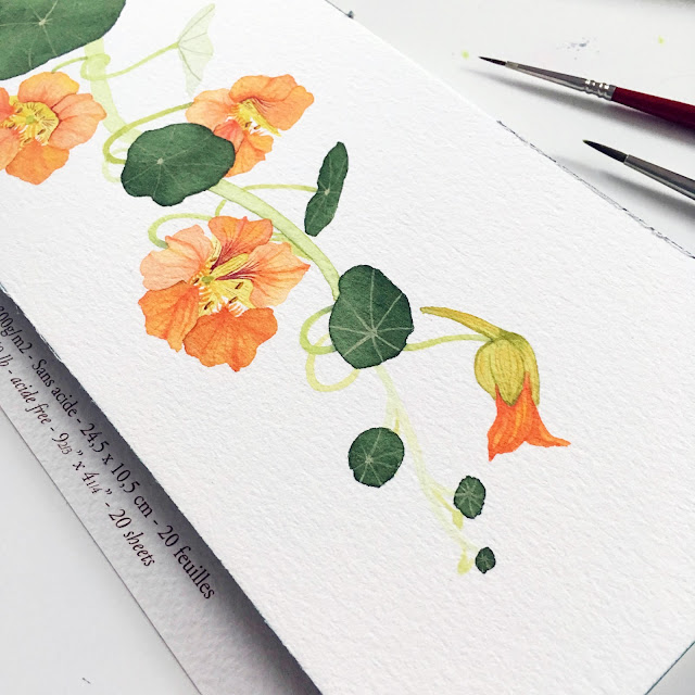 watercolor, painting process, nasturtiums, botanical watercolor, Anne Butera