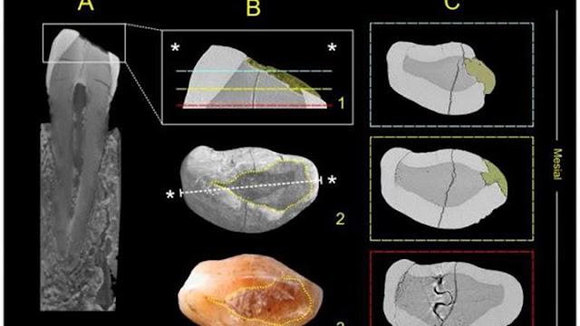 Οι άνθρωποι έκαναν σφραγίσματα πριν από... 13.000 χρόνια