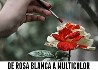Como hacer que una Rosa Blanca sea Multicolor