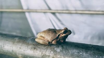 カエル(frog)