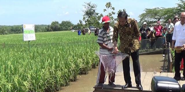 Cerita Presiden Jokowi disemprot petani gara-gara jagung