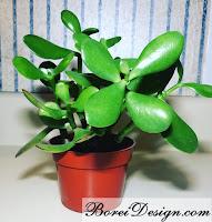 succulent-planter-turtle-plant-stand-tutorial