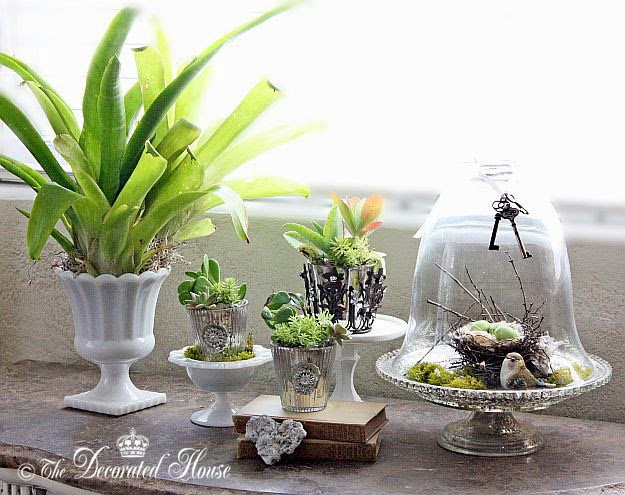 The Decorated House : Decorating with Succulents and Silver - Gardening Indoors