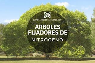 Arboles y arbustos fijadores de nitrógeno para el bosque de alimentos