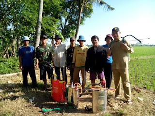 THL TBPPD Jawa Barat : Gerak pengendalian OPT Wereng Batang Coklat di kelompok tani Ciparay Desa Cisaga Kecamatan Cibogo - Subang