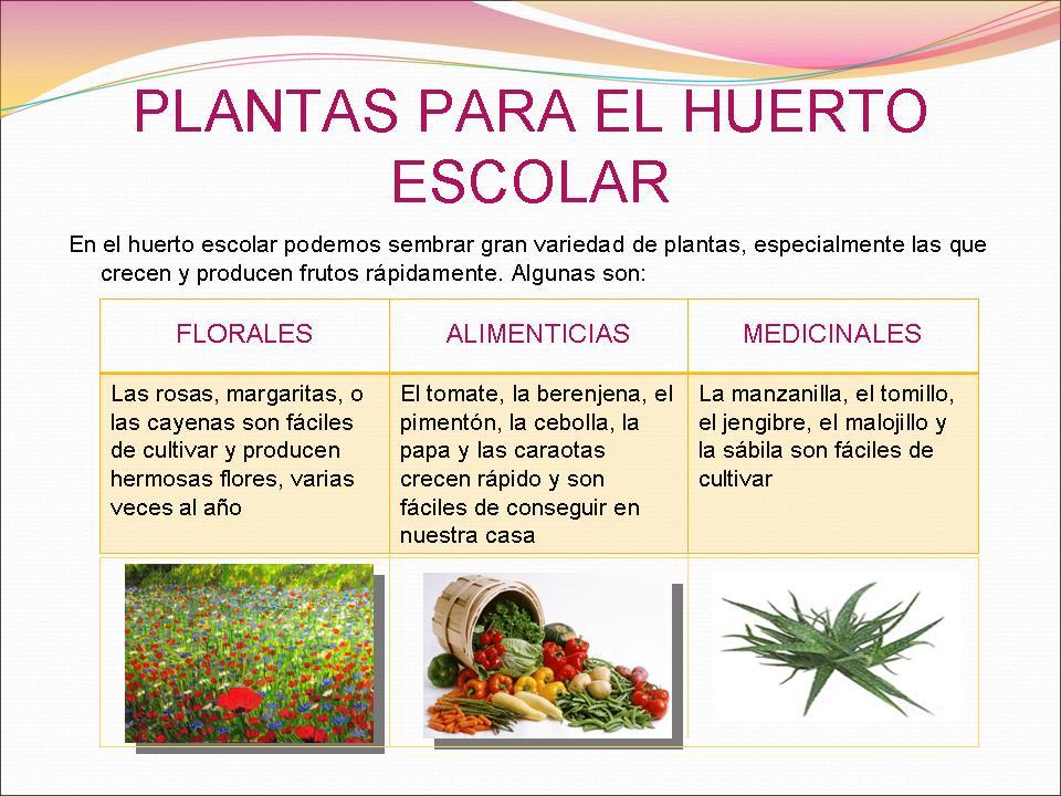 El huerto de los sue os semillas y plantas for Que plantas se siembran en un huerto