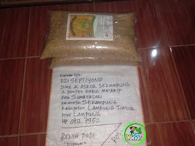 Benih Pesanan   EDI SEPTIYONO Lampung Timur, Lampung    (Sebelum Packing)
