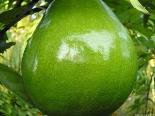 Avocado fruit images wallpaper