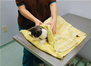 Handling dan Restrain Praktis pada Anjing dan Kucing