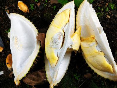 Buah Durian yang menggoda selera