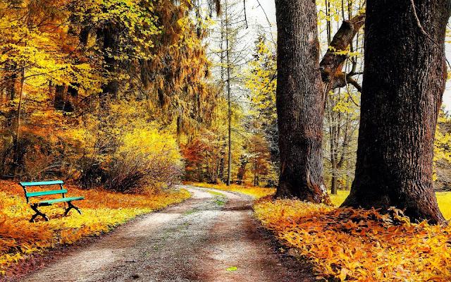 Foto herfst in het park
