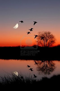 Flat Down and Free 1694046-wild-geese-flying-against-moon-at-majic-hour-sunset-reflected-in-peaceful-still-pond