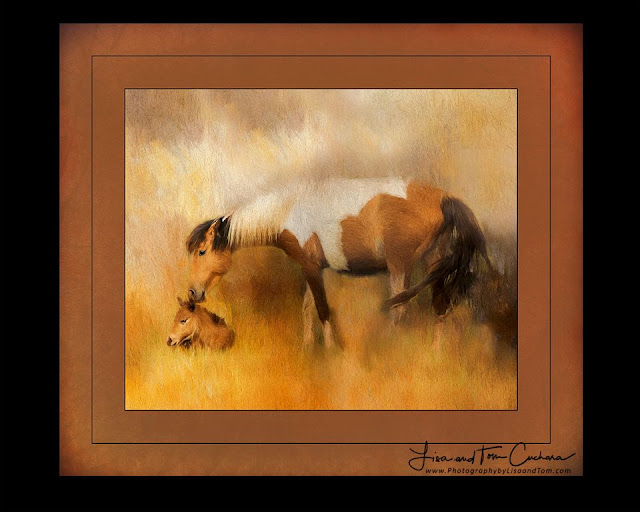 mother wild horse nuzzles her foal; photography by Connecticut photographer Tom Cuchara www.lisaandtomphotography.com