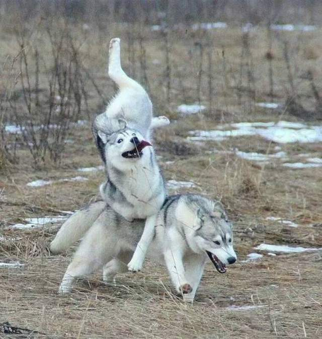 Cute dogs - part 227, dog picture, funny dog photos